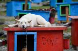 Summer Dog Sled Camp